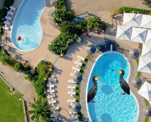 cormorani si piscine